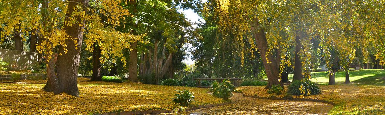 gardens-autumn